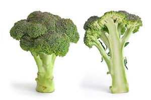 512px-Broccoli_and_cross_section_edit - MNT