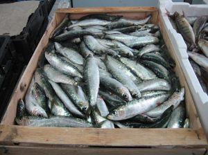 Oily fish are rich in omega-3 fatty acids