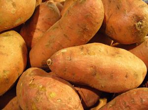 Sweet potato roots are rich in fiber and several important nutrients