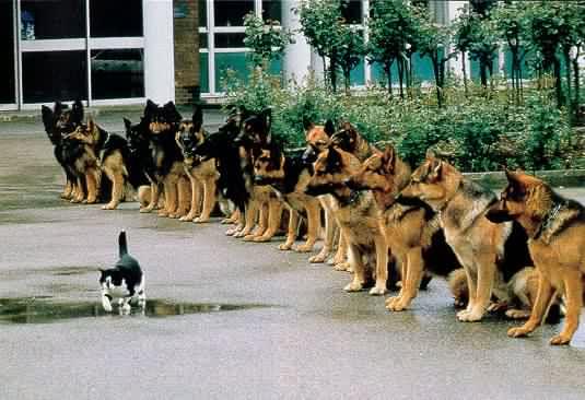 Willpower or Discipline?