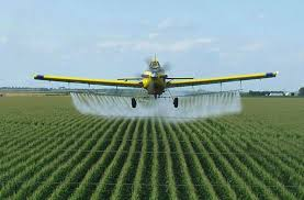 Roundup being sprayed on corn crops.